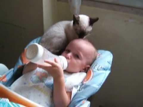 gatto coccolone con il bambino