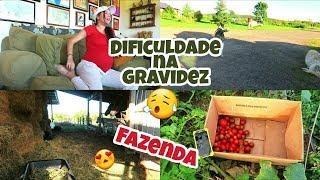 Vlog : Um dia especial - Animais da Fazenda - Muitos tomates !