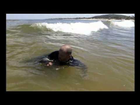 Encontraron delfines bebés