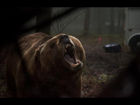 Into the Grizzly Maze (Trailer)