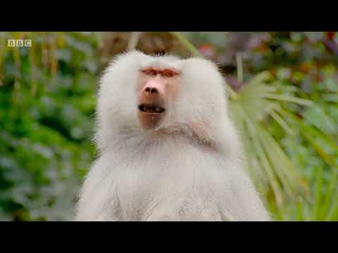 BBC The Zoo series 1 episode 2 - Poo dunnit