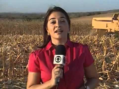 Produtor rural usa tecnologia a favor da produção de milho em Mulungu - PB
