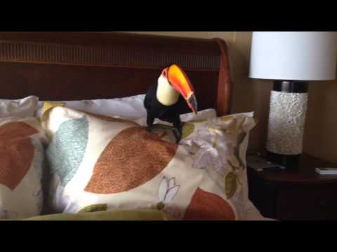 Toucan Playing in Bed Pillows