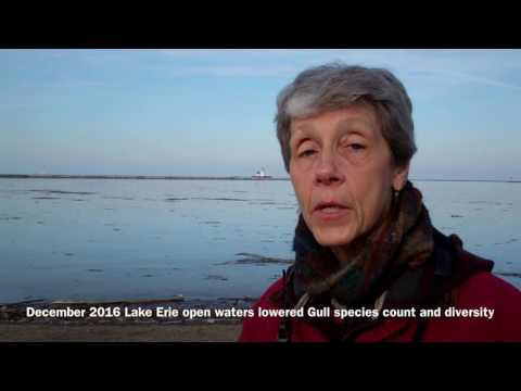 Christmas Bird Count-Lakewood Circle Report 2016