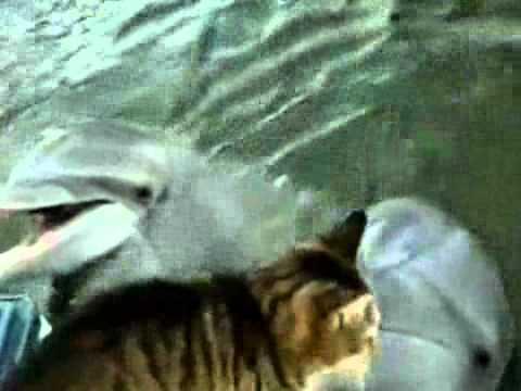 lamicizia-tra-il-gatto-e-il-delfino-329