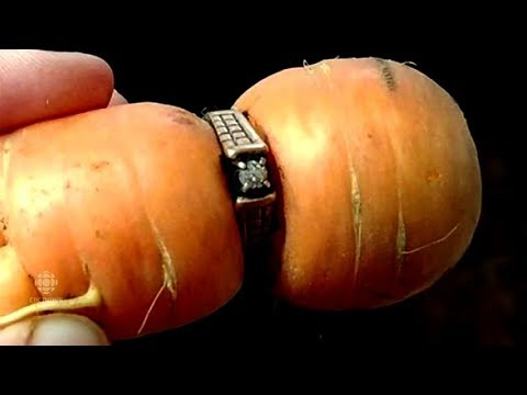 84 Year Old Woman Finds Her Lost Engagement Ring Wrapped Around a Carrot From Her