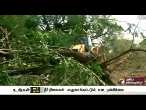 Semmai-Karuvel-trees-in-temple-land-at-Kurumbalur-cleared