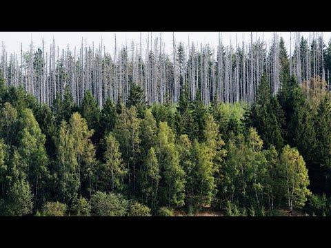 Klöckner & Verbände: Welche Nothilfen kommen für die Wälder?
