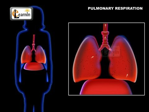 ventilation - This video talks about the basics of pulmonary respiration and ventilation - the basics of taking the air in and out of lungs in human body.