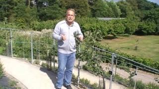 #137 Erhaltungsschnitt für Apfelspaliere - gefilmt in Wisley