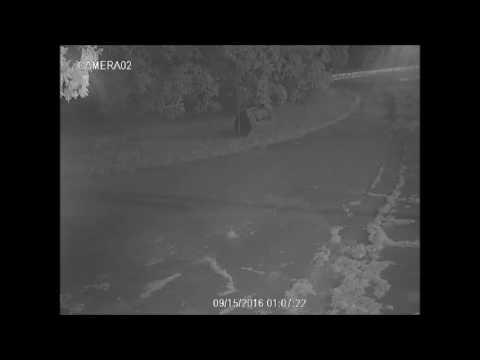 У мережі з'явилось відео, де вандал поганить меморіал Бандері [ВІДЕО]