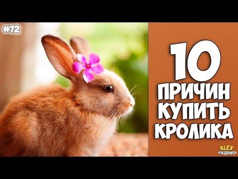 10 ������ ������ ������� - ���������� �����!