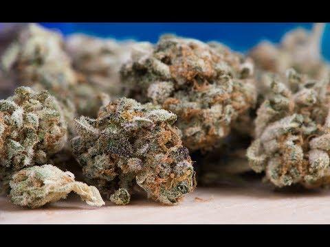 Cannabis Confusion: THC vs CBD Explained