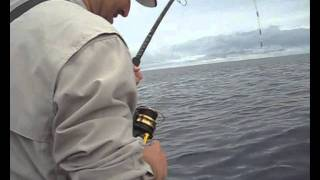 Portland Australia  city photos : Tuna Fishing from Portland Australia