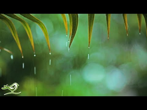 Relaxing Music & Soft Rain: Relaxing Piano Music, Sleep Music, Peaceful Music ★148
