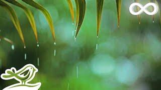 Video Relaxing Music & Soft Rain Sounds: Relaxing Piano Music, Sleep Music, Peaceful Music ★148🍀 MP3, 3GP, MP4, WEBM, AVI, FLV Agustus 2019