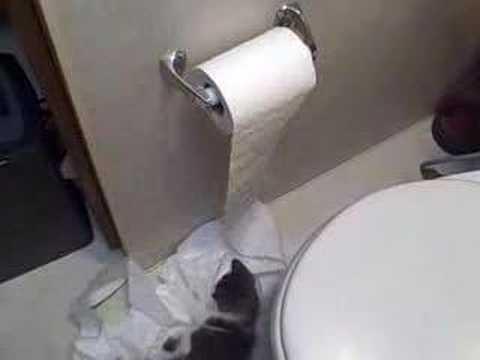 哭笑不得的悲劇,養貓家庭禁用捲筒衛生紙!