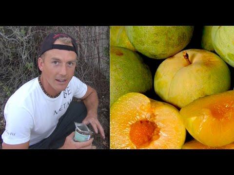 Secret Ingredient to Supercharge Fruit Tree Growth - Emerald Drop Pluot