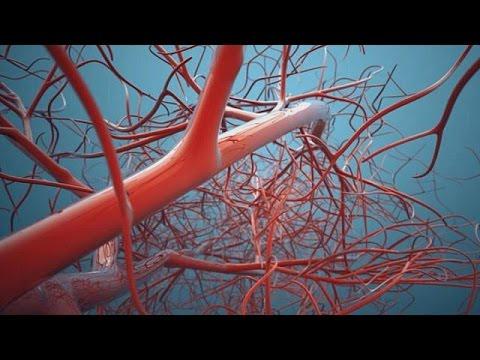 la prima stampante di vasi sanguigni in 3d!