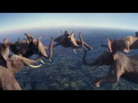 Sky Diving Elephants