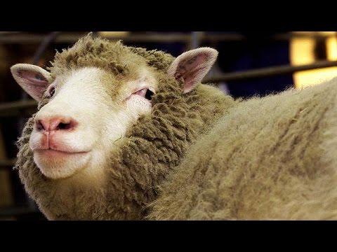 Στρασβούργο: Αυστηρό όχι στην εισαγωγή κλωνοποιημένων ζώων και ζωικών προϊόντων