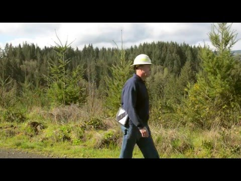 Find Your Path: Stewardship Forester