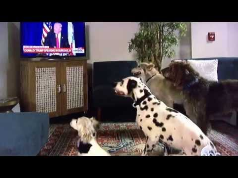 Donald Trump Makes Dogs Sit On Command