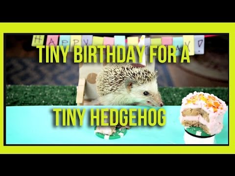 hedgehog - Subscribe for more videos! ▻ http://bit.ly/SubHelloDenizen This Hedgehog knows how to party Keep the suggestions coming! Tell us what you want to see in the ...
