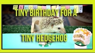 Tiny Birthday For A Tiny Hedgehog
