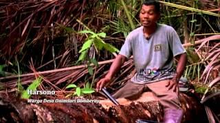 Download Video Kaum Muhajirin di Tanah Papua MP3 3GP MP4