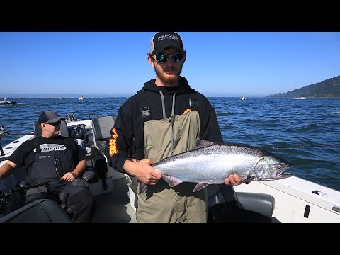 Columbia River Fall Chinook & California Lingcod Fishing