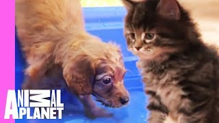 The Best Of Curious, Cuddly Kittens And Puppies!   Too Cute! by Animal Planet