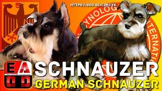 SCHNAUZER - Historia, caracteristicas, cuidados y salud. - EAD...