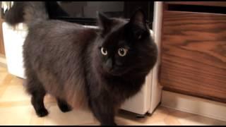 『くろねこルーシー』しゃべる猫「しおちゃん」の応援ビデオメッセージ