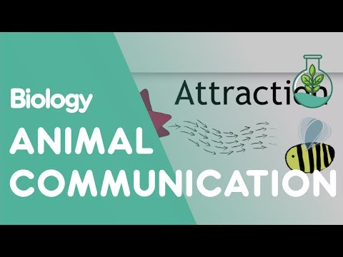 Animal Communication - How do animals communicate in the environment? And how does this affect their behaviour? Learn about animal communication in this GCSE / K12 Ecology video fr...