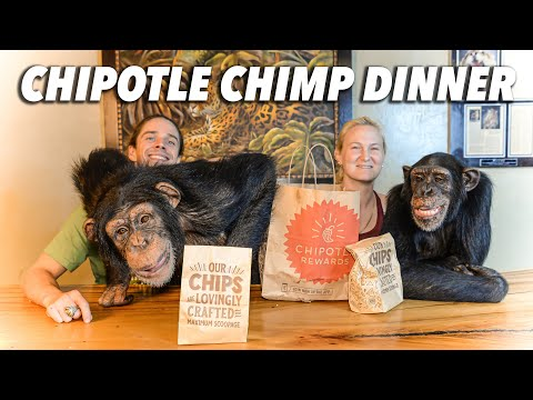 Chimps Get Chipotle for the Wild Family | Chimp Dinner Live