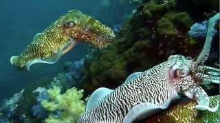 Nonton Black Rock Diving Myanmar Jan2012 Film Subtitle Indonesia Streaming Movie Download