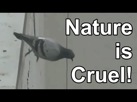 Animals Committing Suicide With Commentary!