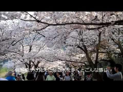 山口県東部の春