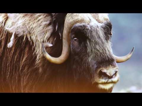 TVS: Napajedla - Přednáška o Norsku