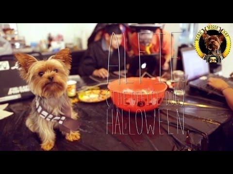 Alfie The Office Dog : Episode 2