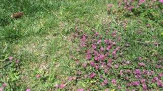 arılar yeşillik, çiçek buldukları her yerde bal yapar. şehrin içinde, parkta arıları çalışırken görüntüledik