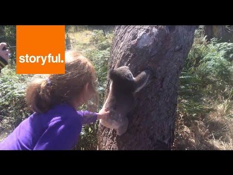 Koala Climbs a Tree (Storyful, Funny)