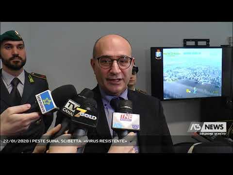 22/01/2020   PESTE SUINA, SCIBETTA: «VIRUS RESISTENTE»