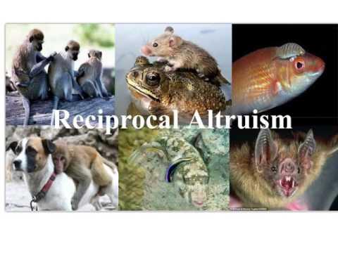 Reciprocal altruism. Evol bio 322
