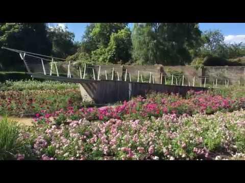 Rose Garden in The Savill Garden