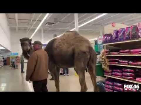 Man takes camel to PetSmart