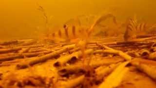 Зимняя рыбалка. Зимний окунь. Мормышка. 30.12.2012