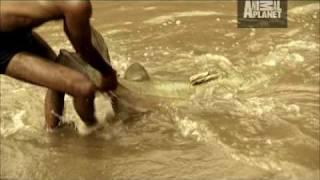 River Monsters - Man-Sized Killer Catfish