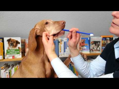 Wie putze ich meinem Hund die Zähne?